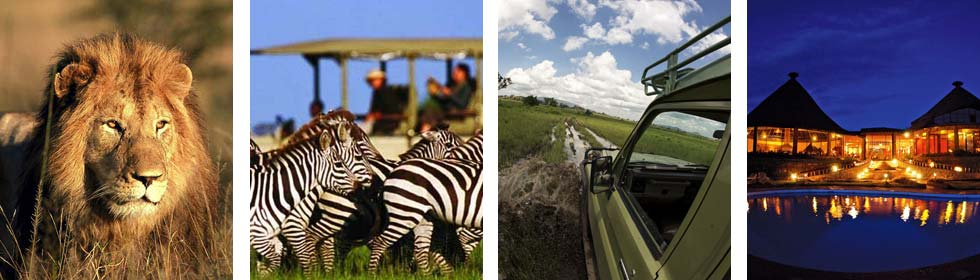 see Lion, Elephand, Zebra and other wild animals on a Wildlife safari