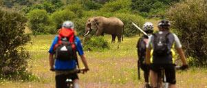 Wildlife Safaris with Safariland Adventures