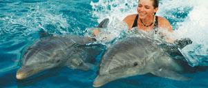 SWIM, SNORKEL, SCUBA-DIVE, SURF & RELAX